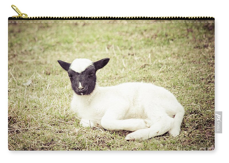 Rustic Scene Carry-all Pouch featuring the photograph Jacob Lamb by Cheryl Baxter