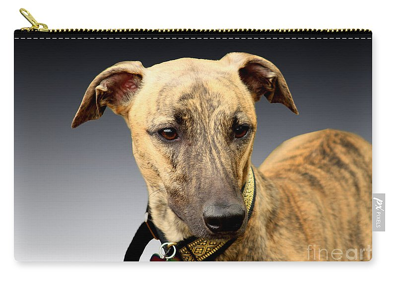 Brindle Carry-all Pouch featuring the photograph Jake by Linsey Williams
