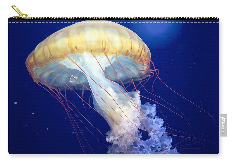 Japanese Sea Nettle Carry-all Pouch featuring the photograph Japanese Sea Nettle Chrysaora Pacifica by Mary Lee Dereske
