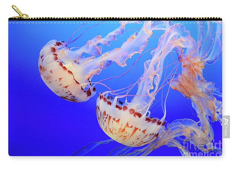 Jellyfish Carry-all Pouch featuring the photograph Jellyfish 9 by Bob Christopher