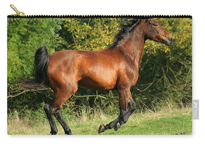 Horse Carry-all Pouch featuring the photograph Jump Jump Jump by Angel Ciesniarska