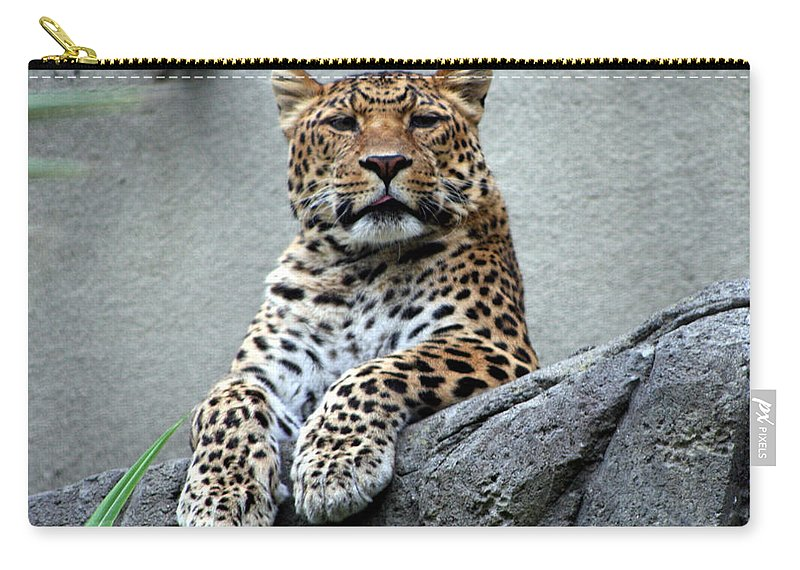 Leopard Carry-all Pouch featuring the photograph Just Chillin' by DJ Florek