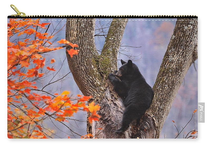 Black Bear Carry-all Pouch featuring the photograph Just Hanging Out by Shari Jardina