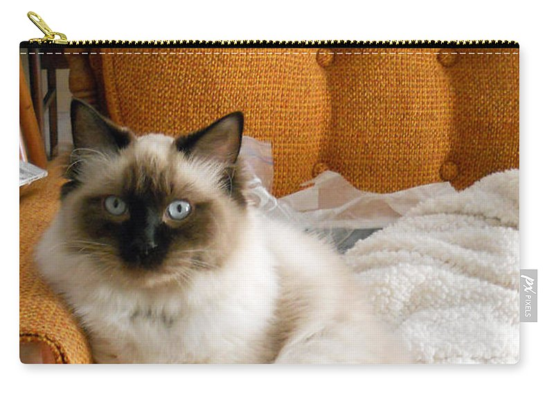 Cat Carry-all Pouch featuring the photograph Just Sitting by Nancy L Marshall
