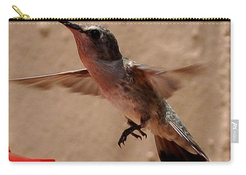 Hummingbird Carry-all Pouch featuring the photograph Juvenile Broadtale Anna Hummingbird Landing On The Perch by Jay Milo