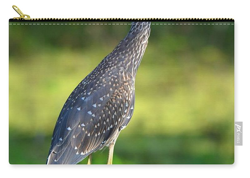 Yellow-crowned Night Heron Carry-all Pouch featuring the photograph Juvenile by Deanna Cagle