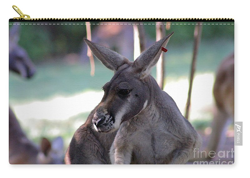 Kangaroo Carry-all Pouch featuring the photograph Kangaroo-10 by Gary Gingrich Galleries