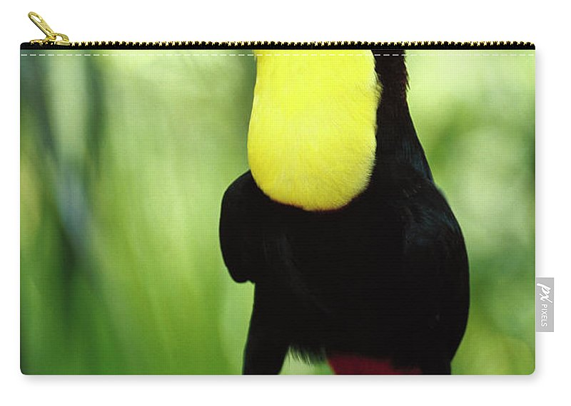 Belize Carry-all Pouch featuring the photograph Keel-billed Toucan by Gerry Ellis