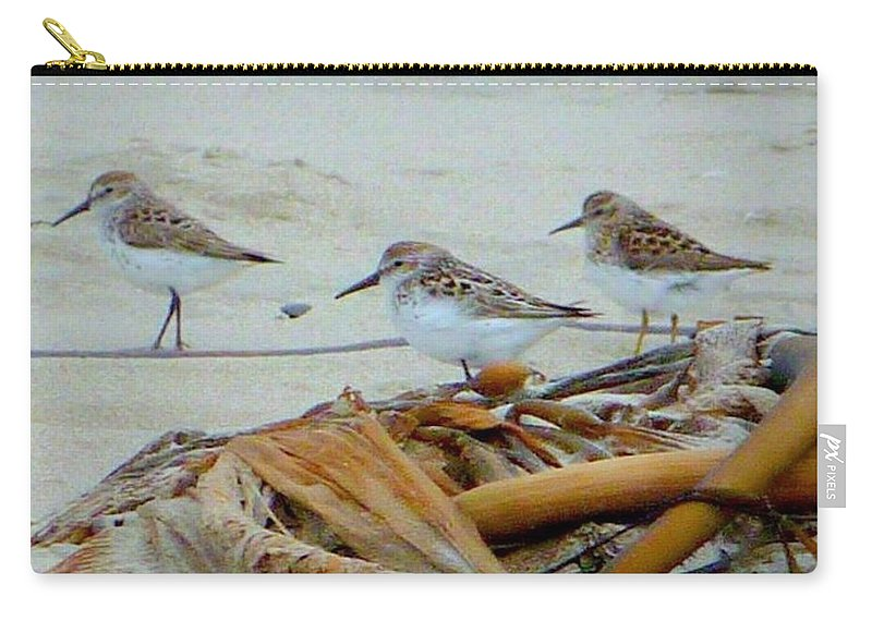 Birds Carry-all Pouch featuring the photograph Kelp Standing Visitors by Susan Garren