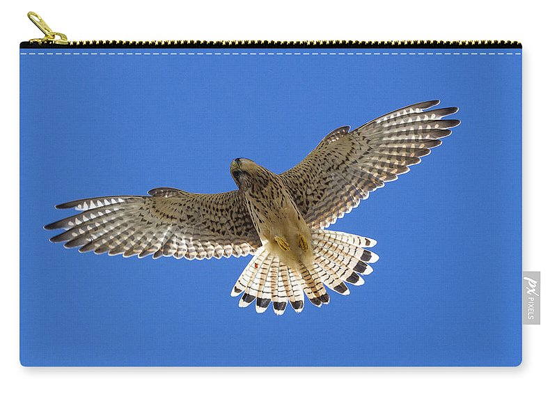 Kestrel Carry-all Pouch featuring the photograph Kestrel by Chris Smith