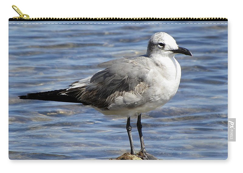 Water Carry-all Pouch featuring the photograph King Of The Rock Seagull by Bob Slitzan