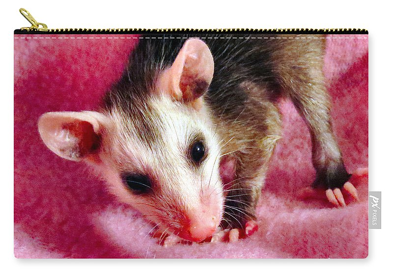Opossum Carry-all Pouch featuring the photograph Kissable by Art Dingo