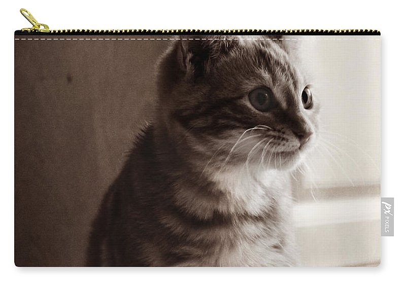 Kitten Carry-all Pouch featuring the photograph Kitten In The Light by Melanie Lankford Photography