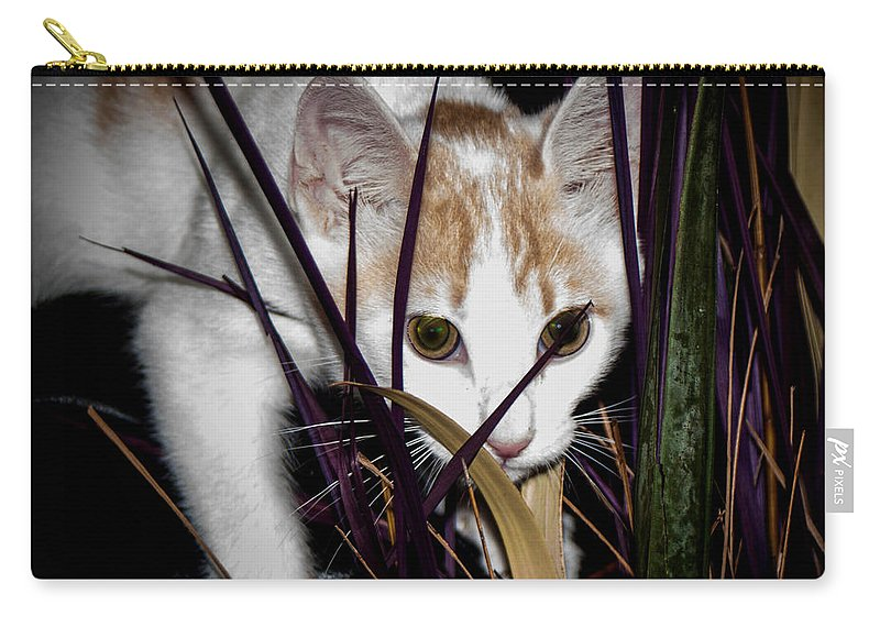 Kitten In The Plant Carry-all Pouch featuring the photograph Kitten In The Plant by Mechala Matthews