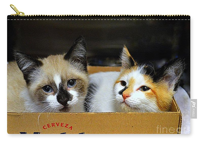 Kittens Carry-all Pouch featuring the photograph Kittens In A Box by Catherine Sherman