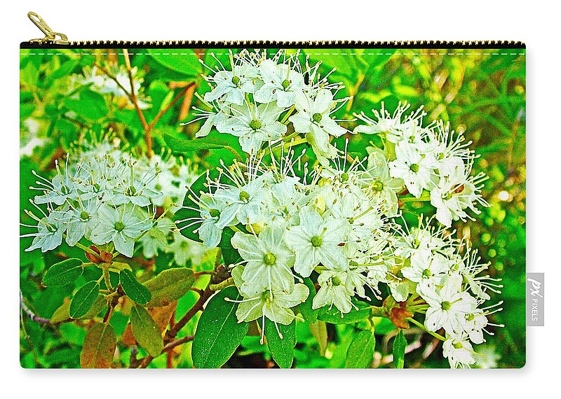 Labrador Tea In Sawtooth National Recreation Area Carry-all Pouch featuring the photograph Labrador Tea In Sawtooth National Recreation Area-idaho by Ruth Hager