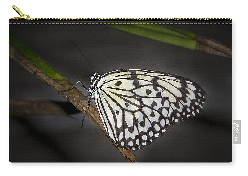 Butterfly: Animals Carry-all Pouch featuring the photograph Lacey by Jean Noren