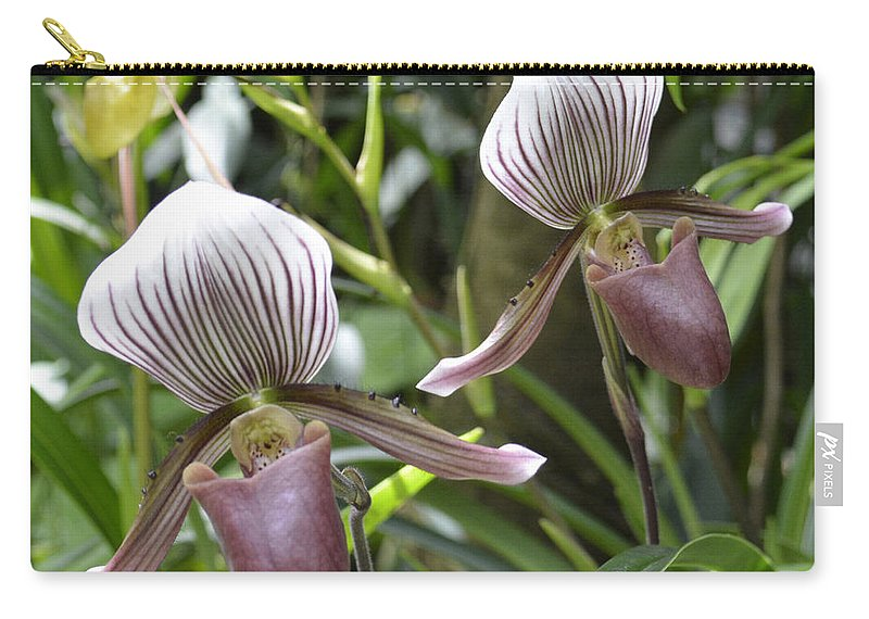 Lady Slipper Carry-all Pouch featuring the photograph Lady Slippers by To-Tam Gerwe