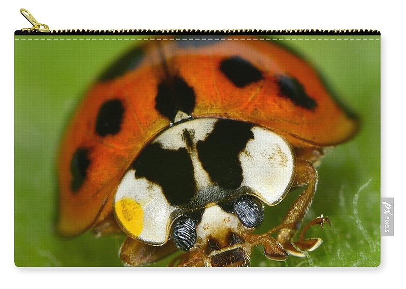 Harmonia Axyridis Carry-all Pouch featuring the photograph Lady by Tony Beck