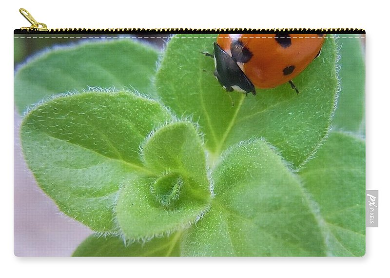 Ladybug Carry-all Pouch featuring the photograph Ladybug And Oregano by Robert ONeil