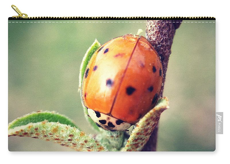 Ladybug Carry-all Pouch featuring the photograph Ladybug by Kerri Farley