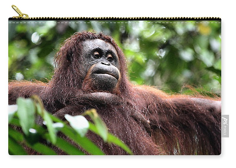 Orangutan Carry-all Pouch featuring the photograph Large Female Orangutan Borneo by Carole-Anne Fooks