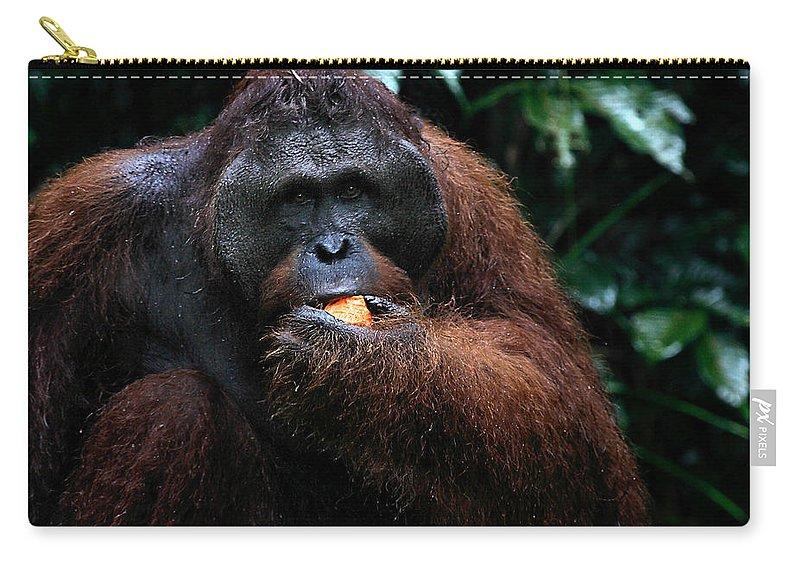 Orangutan Carry-all Pouch featuring the photograph Large Male Orangutan Borneo by Carole-Anne Fooks