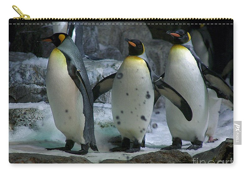 Penguins Photographs Carry-all Pouch featuring the photograph Larry.. Moe And Curly by Barb Dalton
