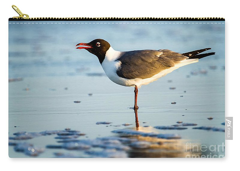 Lauging Gull On The Beach Carry-all Pouch featuring the photograph Laughing Gull On The Beach At Fort Clinch State Park Florida by Dawna Moore Photography