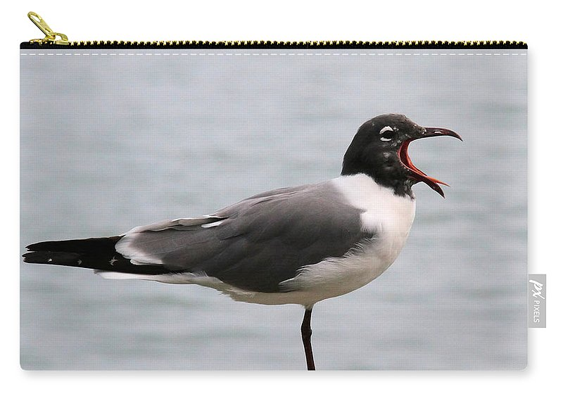 Laughing Gull Carry-all Pouch featuring the photograph Laughing Gull by Doris Potter