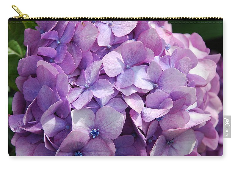 Purple Carry-all Pouch featuring the photograph Lavender Hydrangea by Charlie and Norma Brock