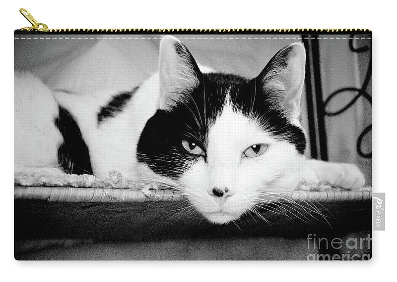 Andee Design Cat Carry-all Pouch featuring the photograph Le Cat by Andee Design