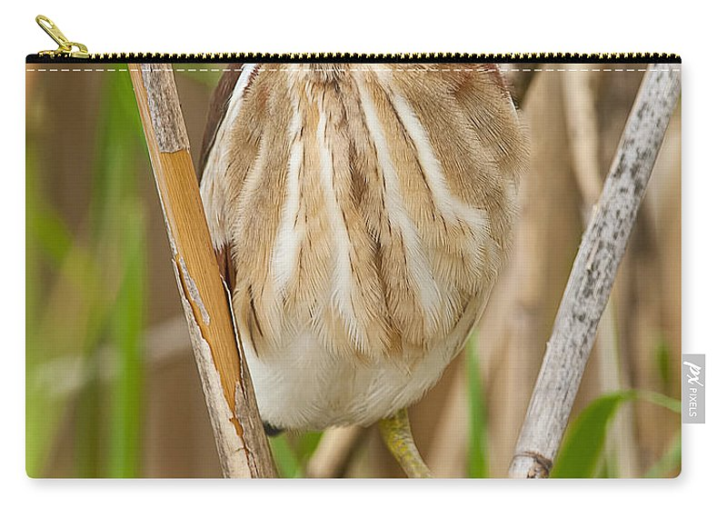 Least Bittern Carry-all Pouch featuring the photograph Least Bittern Pictures 35 by World Wildlife Photography