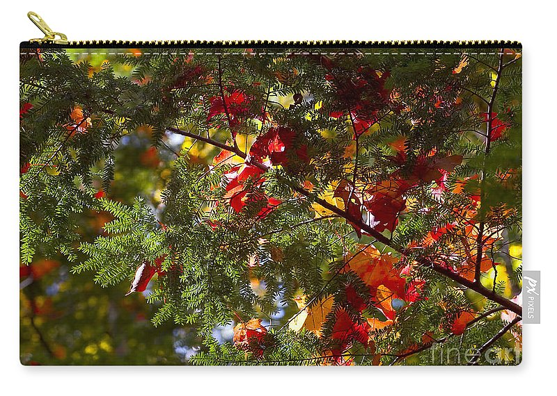 Ralser Carry-all Pouch featuring the photograph Leaves On Evergreen by Steven Ralser