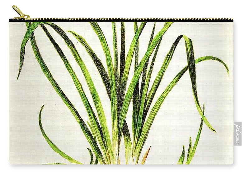 Daylily Carry-all Pouch featuring the drawing Lemon Daylily Botanical by Rose Santuci-Sofranko