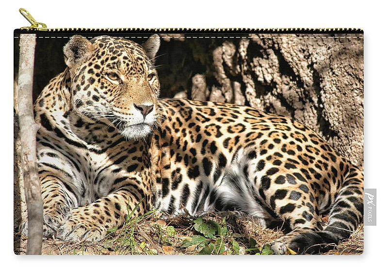 Leopard Carry-all Pouch featuring the photograph Leopard by Debby Richards