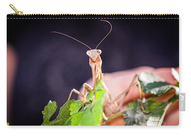 Praying Mantis Carry-all Pouch featuring the photograph Let Us Pray by Sennie Pierson