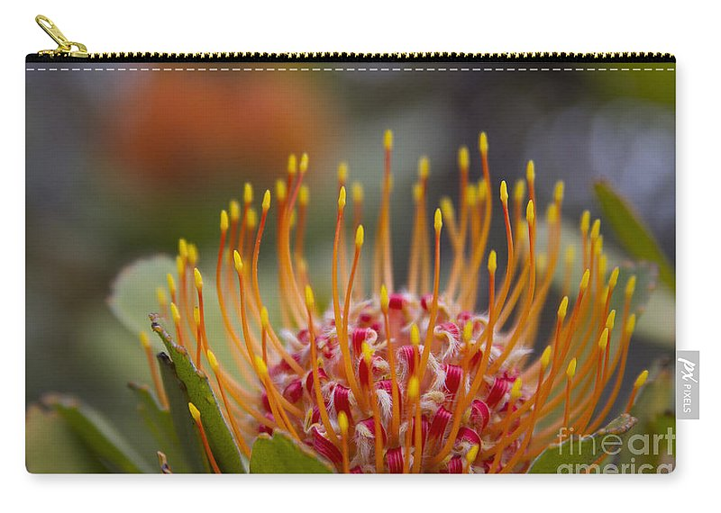 Leucospermum Carry-all Pouch featuring the photograph Leucospermum Pincushion Protea - Tropical Sunburst by Sharon Mau