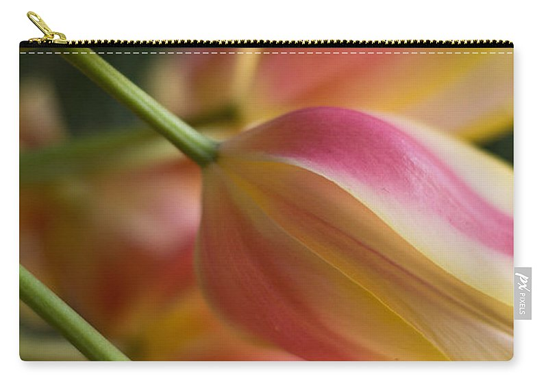 Tulip Carry-all Pouch featuring the photograph Light Of Spring by Mike Reid