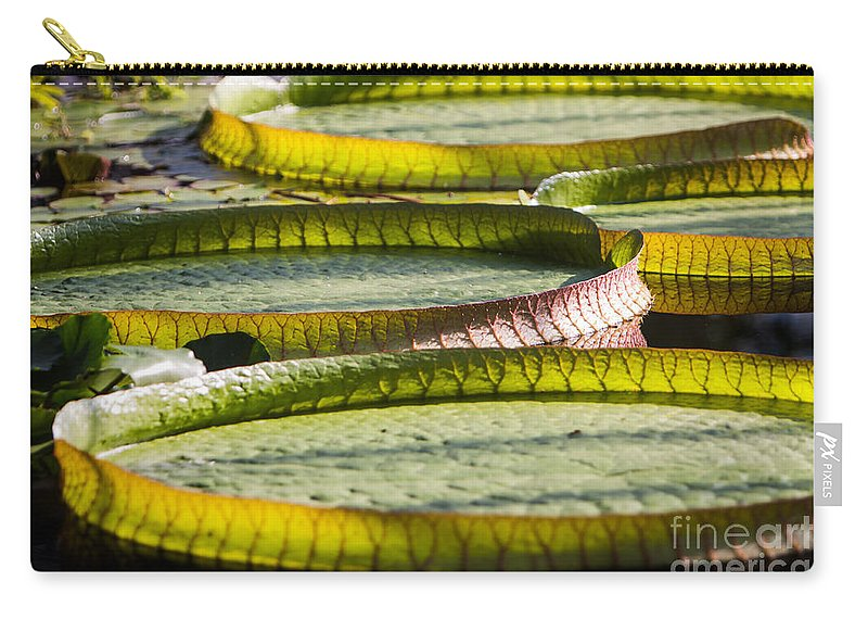 Botanical Carry-all Pouch featuring the photograph Lilly Pads by John Wadleigh