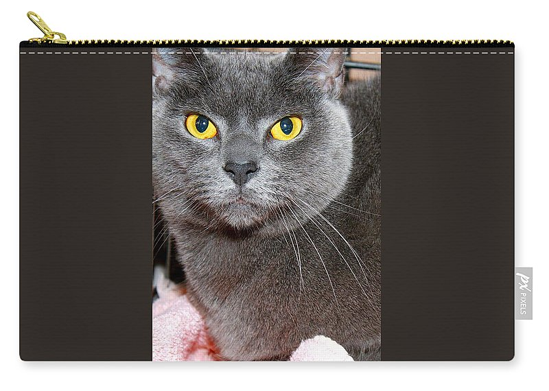 Russian Blue Carry-all Pouch featuring the photograph Lil'one by Joyce Baldassarre