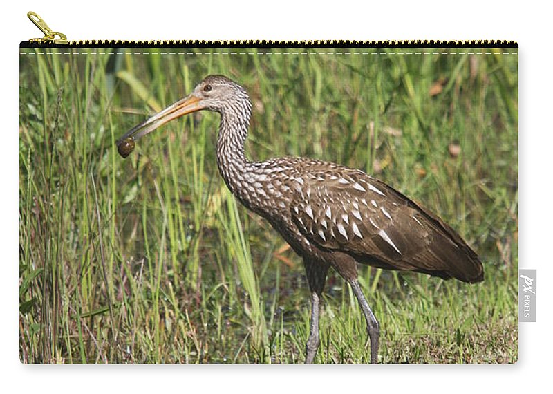 Limpkin Carry-all Pouch featuring the photograph Limpkin With Apple Snail by Christiane Schulze Art And Photography