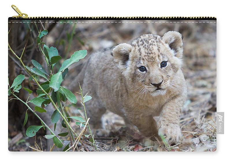 African Lion Carry-all Pouch featuring the photograph Lion Cub by Max Waugh