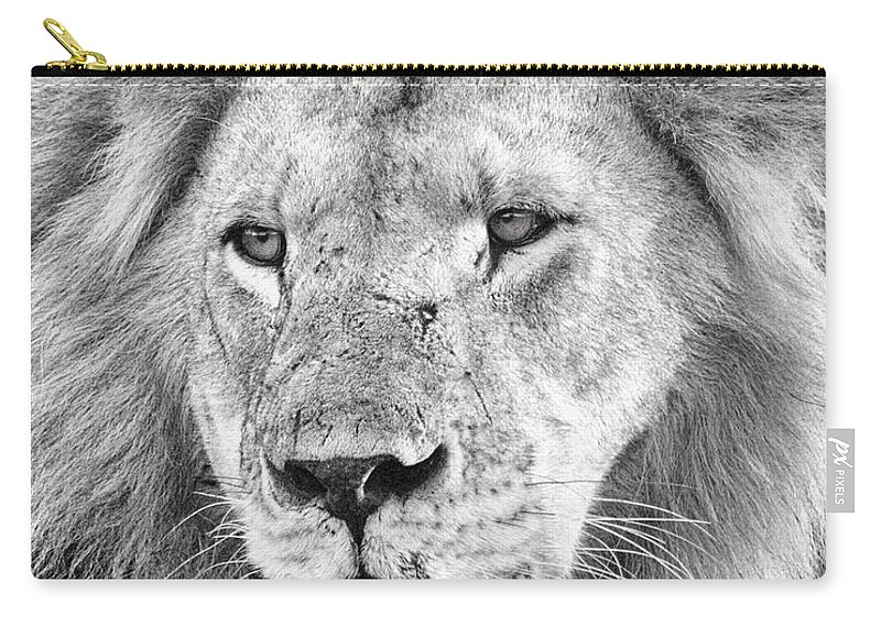 3scape Carry-all Pouch featuring the photograph Lion King by Adam Romanowicz