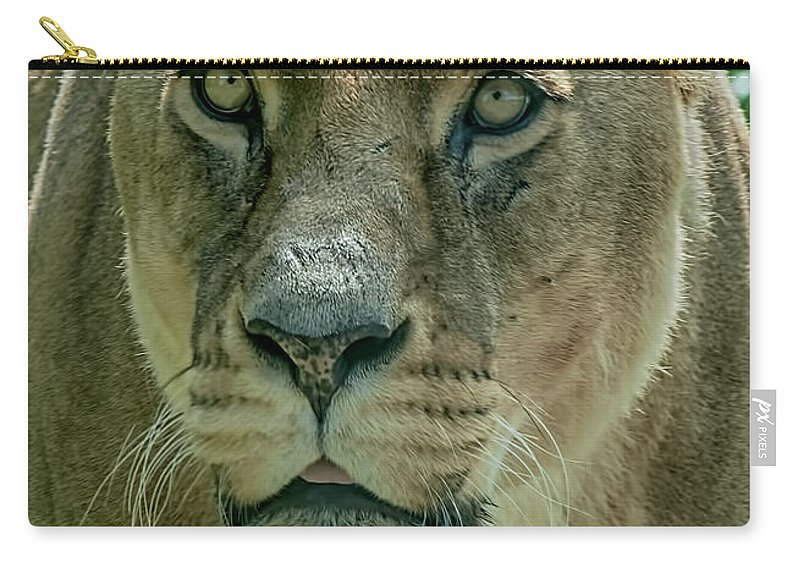 Lion Canvas Carry-all Pouch featuring the photograph Lioness Female Lion 2 by Chris Thaxter