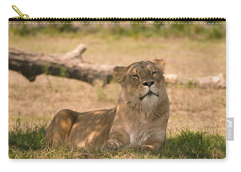 Large Feline Carry-all Pouch featuring the photograph Lioness by Tracy Winter