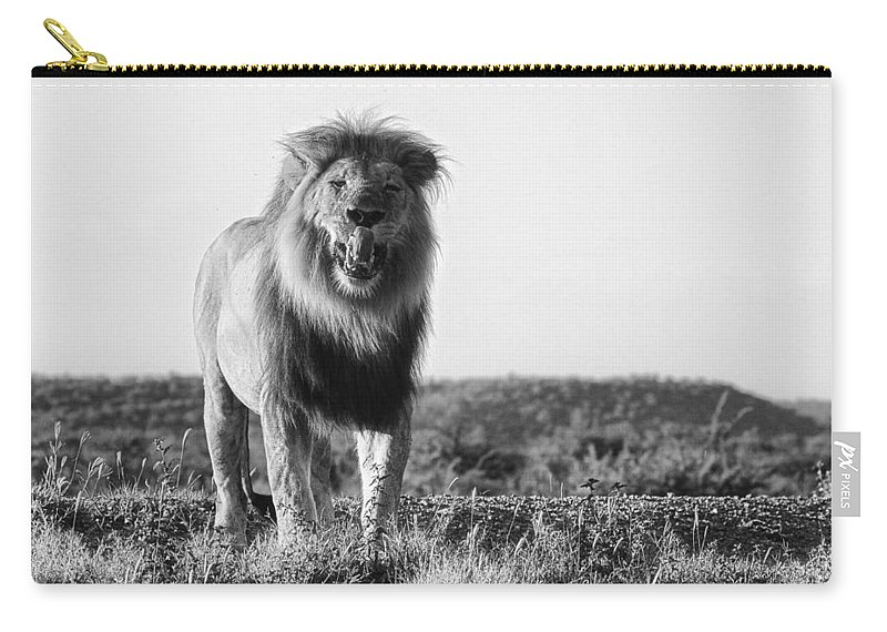 Lion. Male Carry-all Pouch featuring the photograph Lip Lickin Good B And W by Douglas Barnard