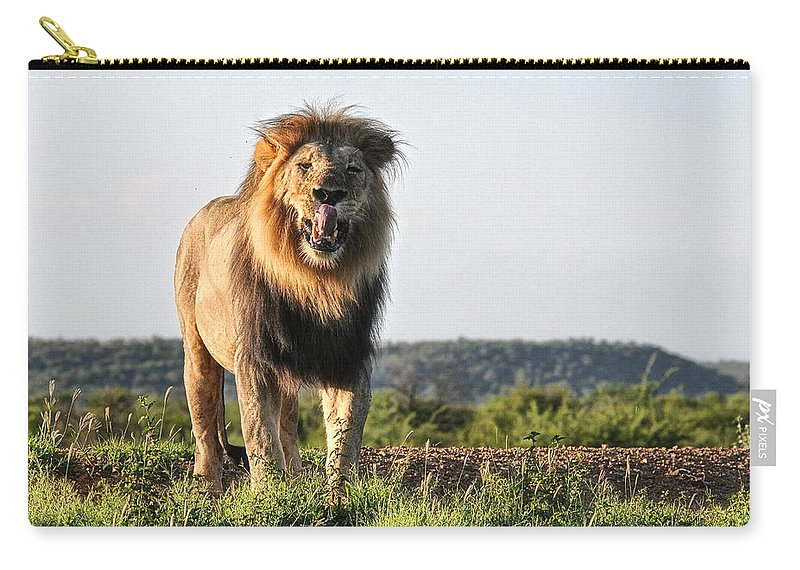 Lion. Male Carry-all Pouch featuring the photograph Lip Lickin Good by Douglas Barnard