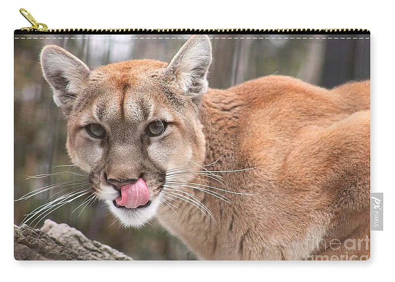 Cougar Carry-all Pouch featuring the photograph Lip Licking Good - Cougar by Nikki Vig