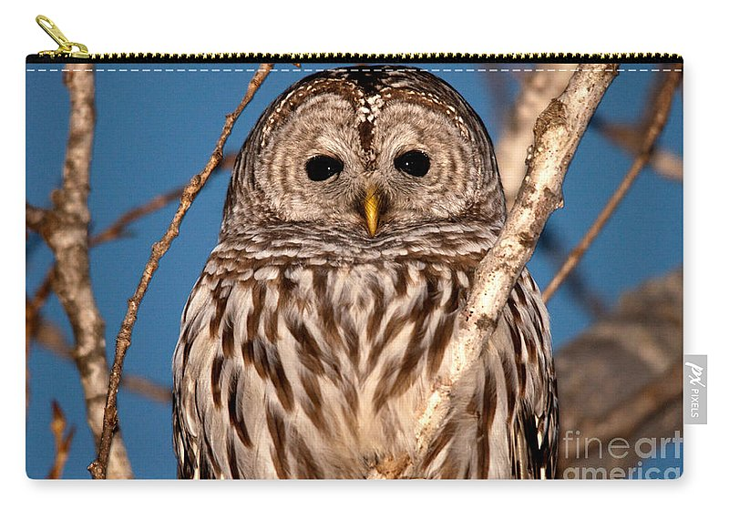 Owls Carry-all Pouch featuring the photograph Lit Up Owl by Cheryl Baxter